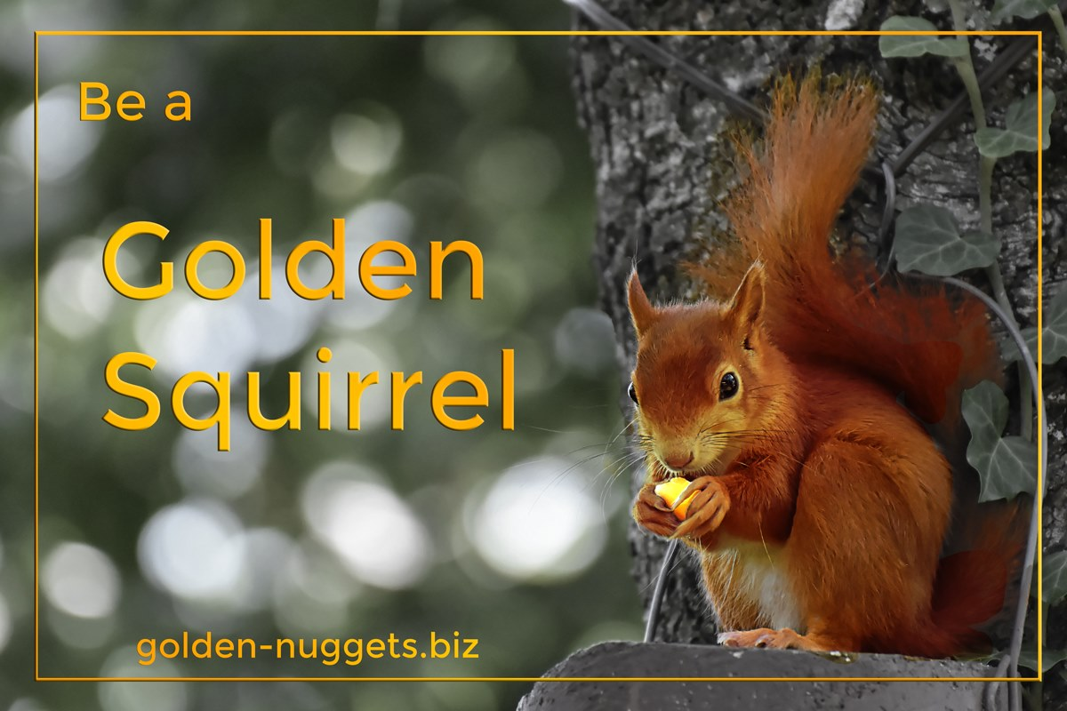 goldensquirrel